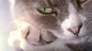 """""""Kedi: Von Katzen und Menschen"""" – Ein Streicheln für die Seele"""